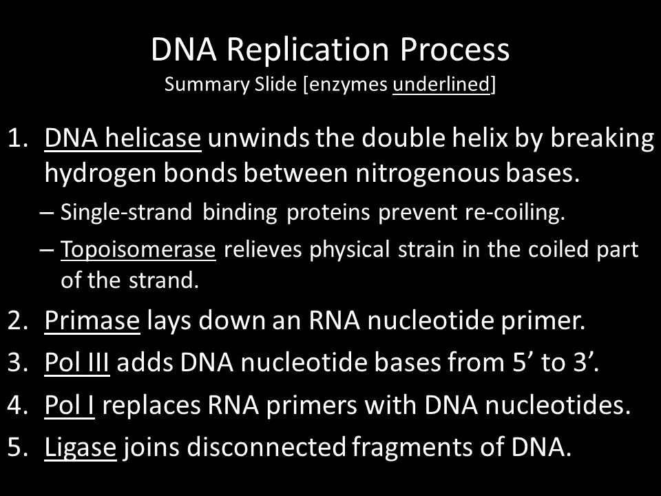 DNA Replication Process Summary Slide [enzymes underlined]